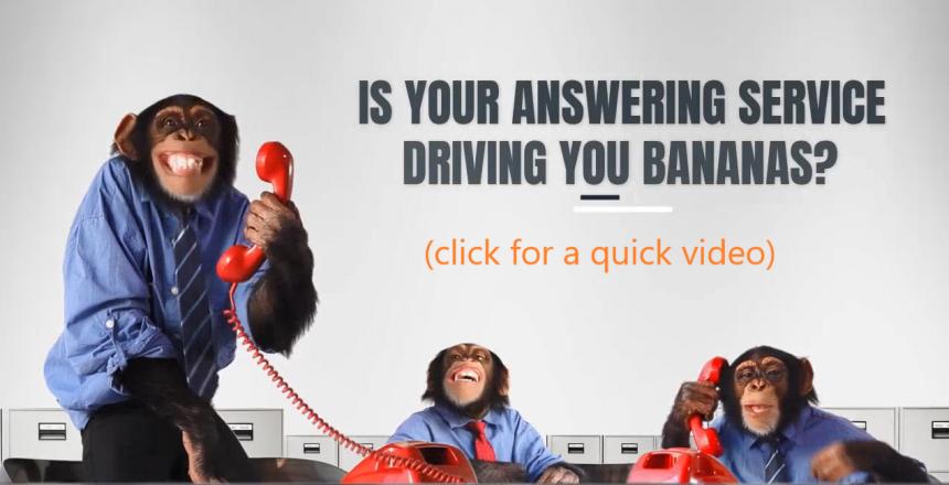 monkeys-thumbnail